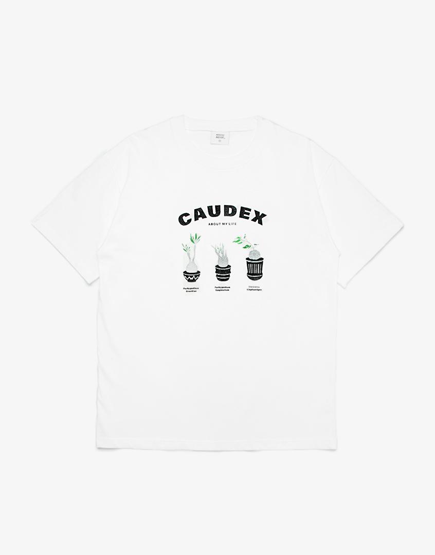CAUDEX象牙宮塊根植物TEE